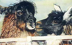 "Llama Llove 24"" x 32"" watercolor gicl'ee reproduction available"