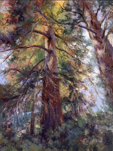 """The Grand Giant Sequoia's"" pastel giclee's available"