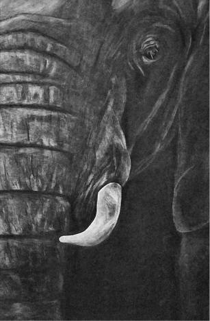 """White Ivory"" White Charcoal by Alexis Wilson"